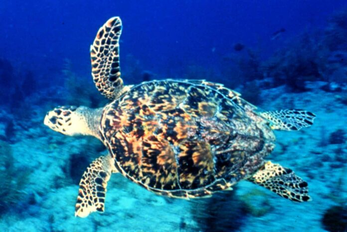 The Great Barrier Reef: See it While You Can | 27
