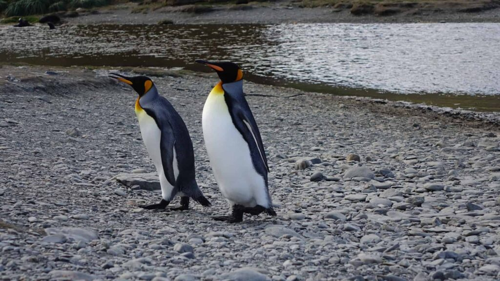 5 Reasons to Take an Expedition Cruise to Antarctica | 5