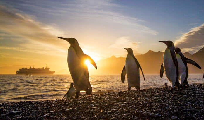 King Penguins and National Geographic Explorer.